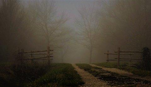 bosco e nebbia di R. Tagliaferri